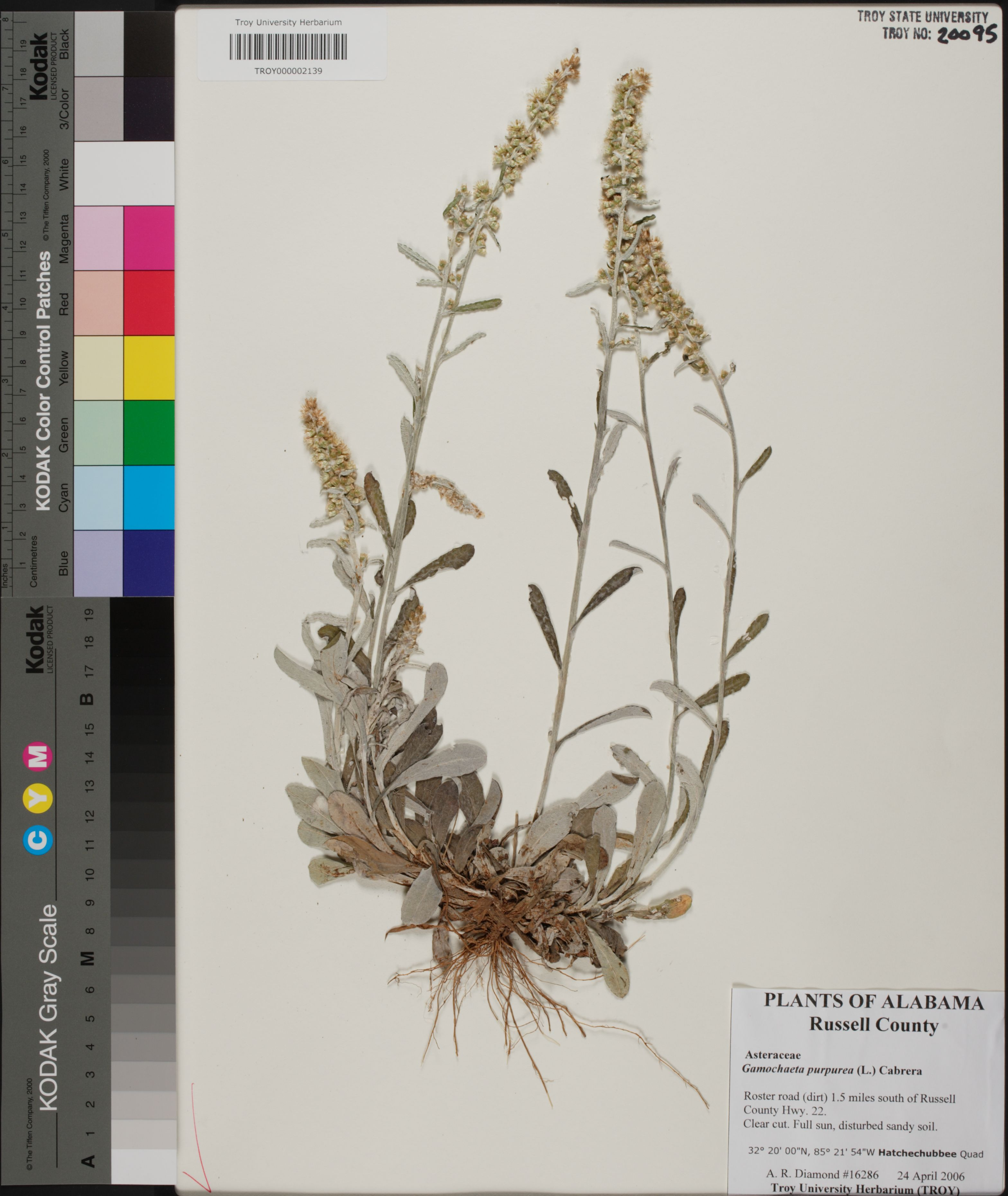 Alabama russell county hatchechubbee - Herbarium
