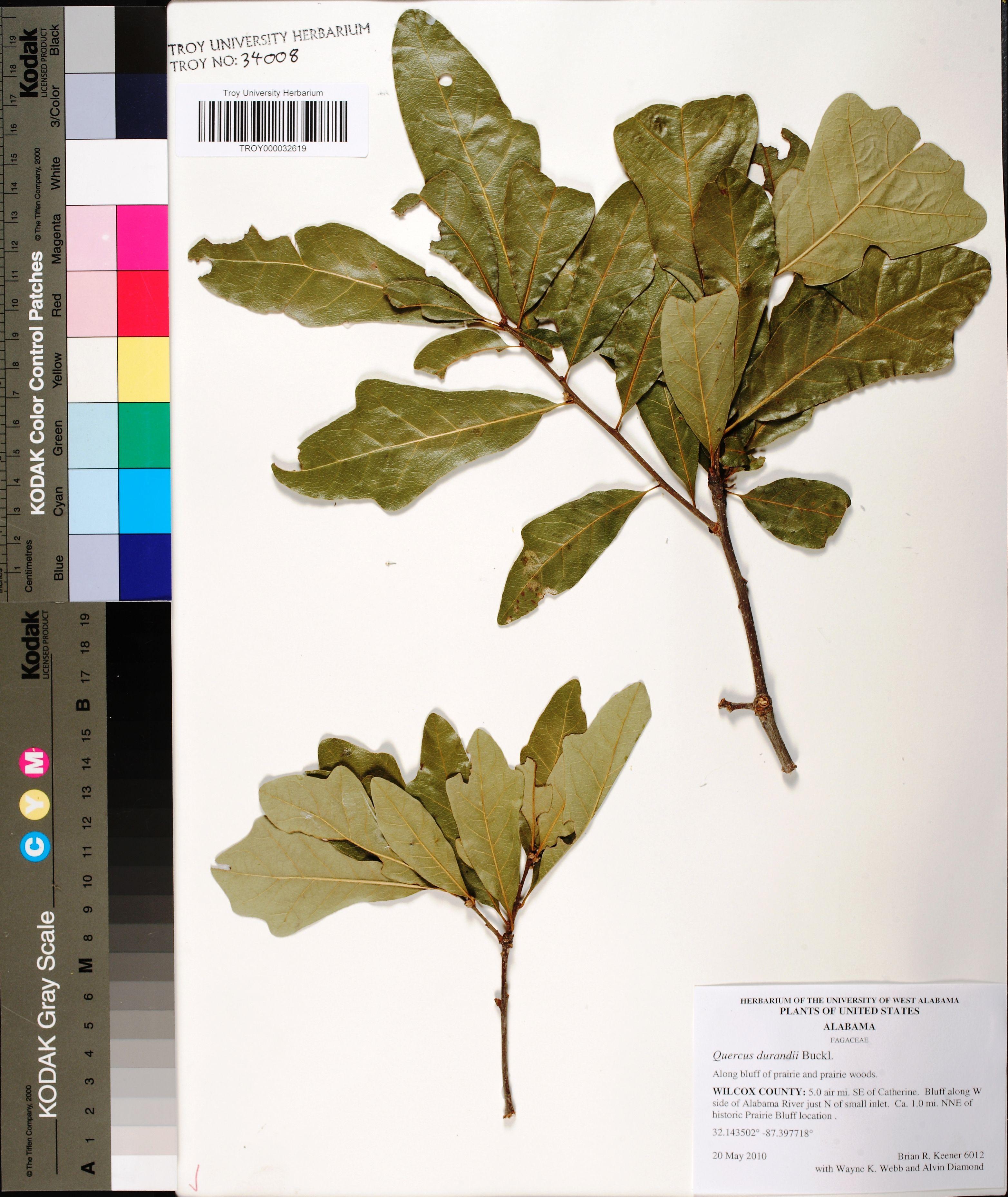Alabama wilcox county catherine - Herbarium