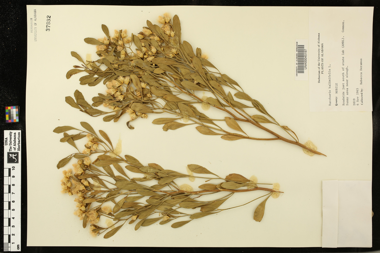 Herbarium Specimen Details
