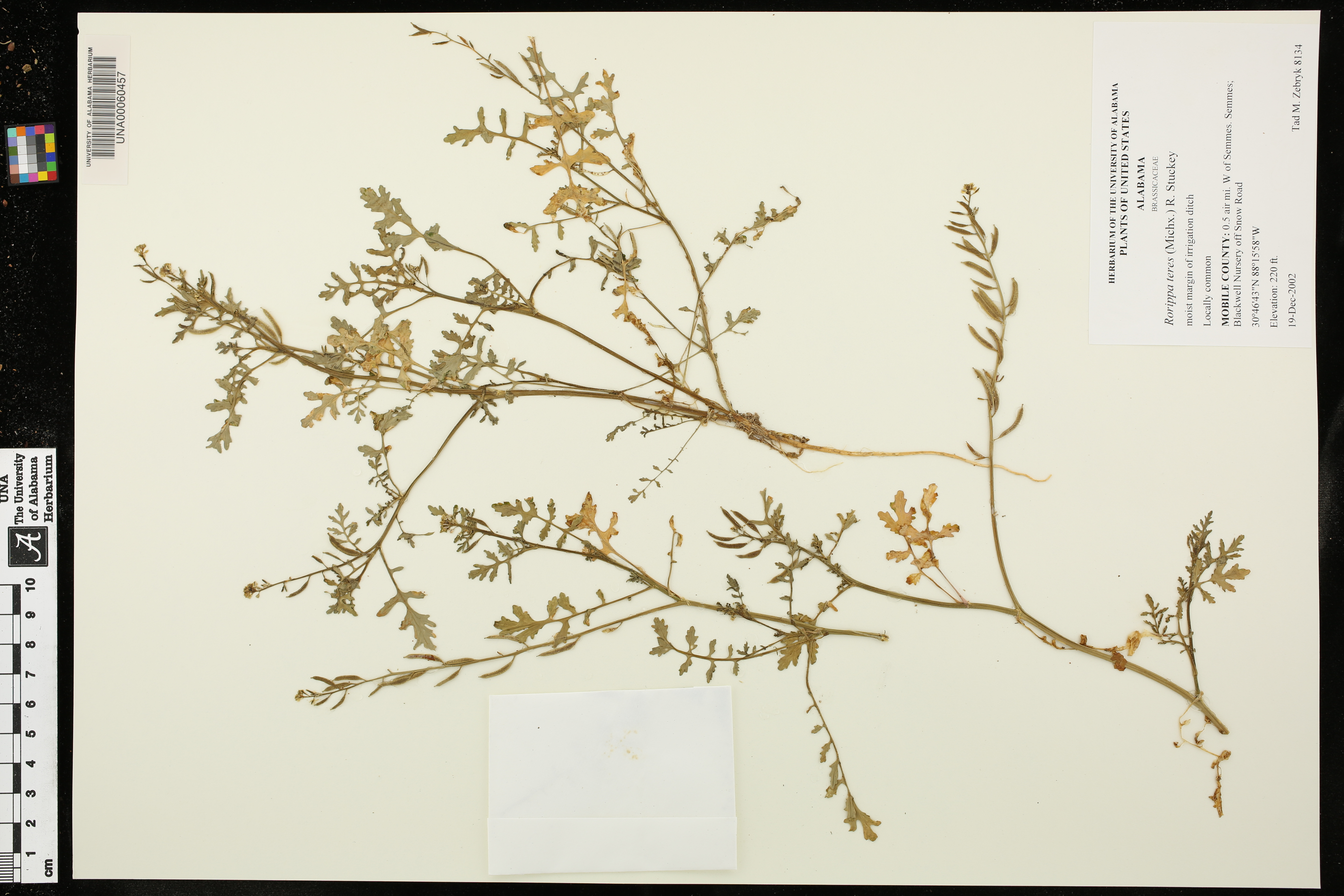 Alabama mobile county semmes - Herbarium