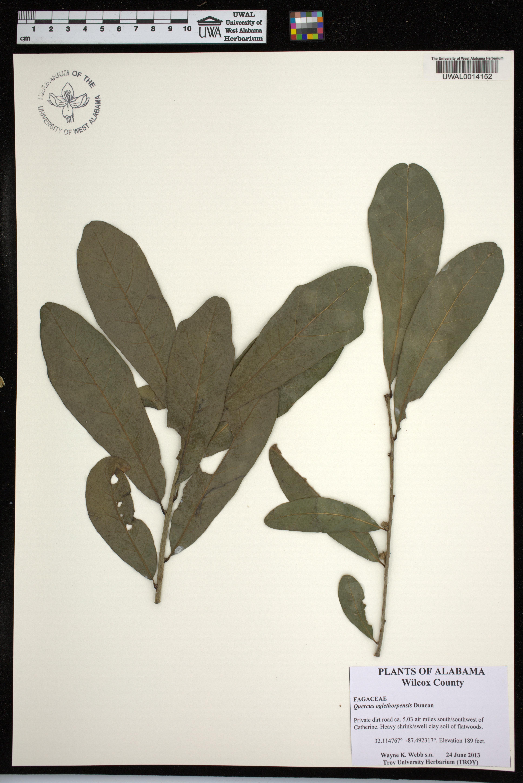 Alabama wilcox county catherine - This Specimen Has A Photo